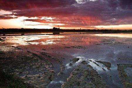 arrozales al atardecer albufera valencia