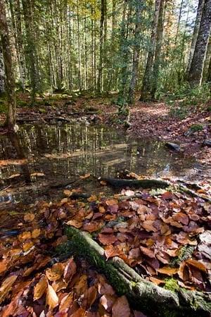 Arroyo en el bosque